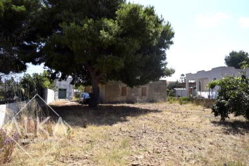 Villa Contrada Molinello Alcamo06 terreno_DSC0133