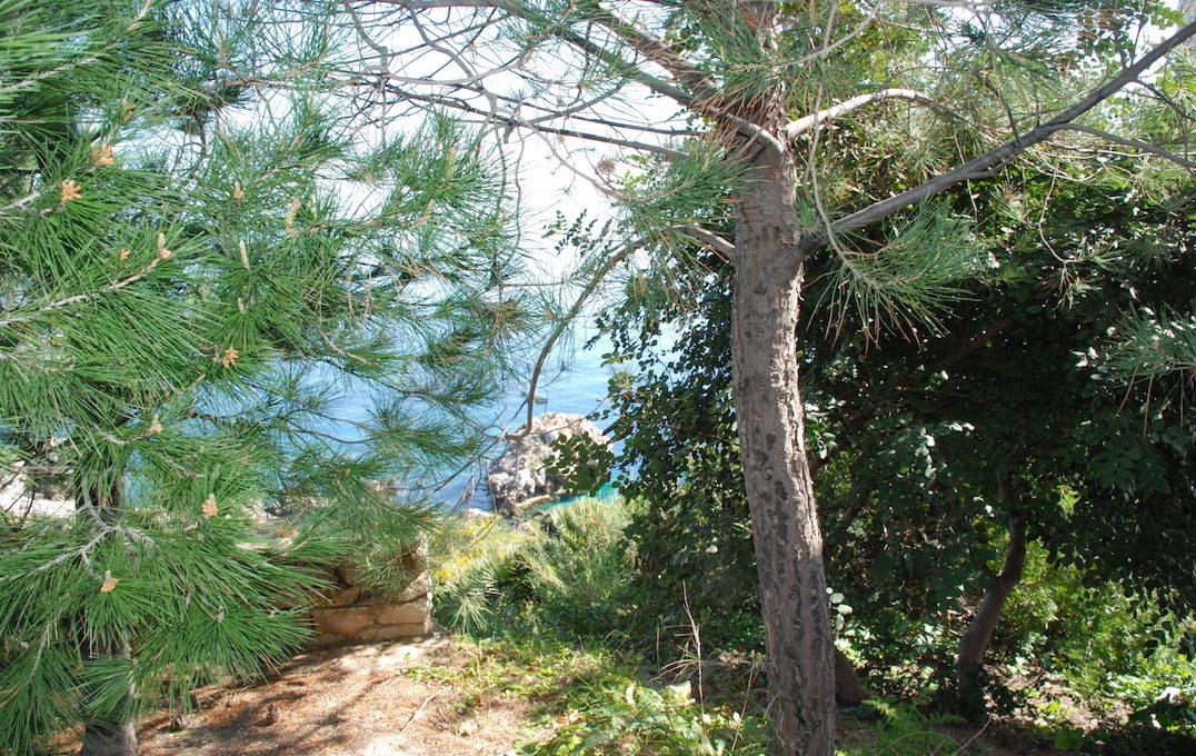 villa velaCastellammare del Golfo03 vista macchia mediterranea dal piazzale