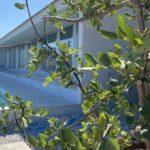 IMG 9936 150x150 - Casa indipendente ad Alcamo Marina a soli 30 metri dal mare